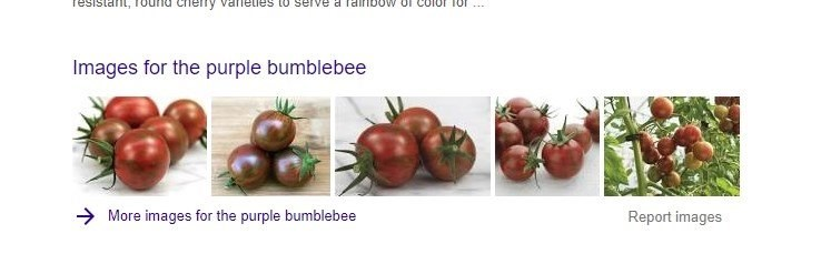 A tomato called the purple bumble bee